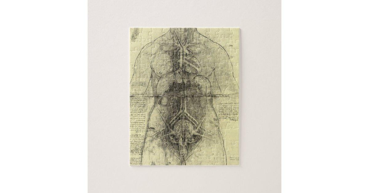 Puzzle Anatomía humana, torso femenino de Leonardo da   Zazzle.es