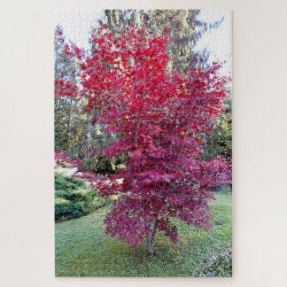 Puzzle Árbol de arce rojo hermoso