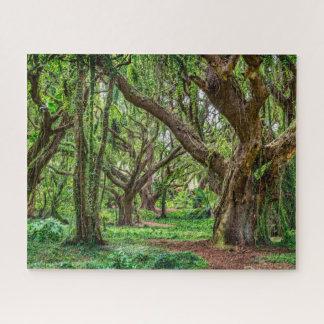 Puzzle Árboles de la selva tropical