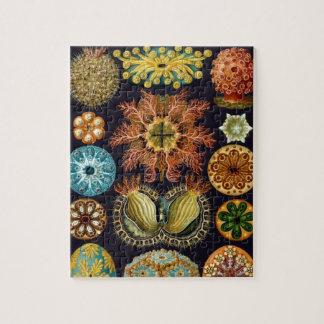 Puzzle Ascidiae de Ernst Haeckel, animales marinos del
