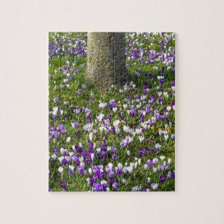 Puzzle Azafranes del campo de flores en hierba de la