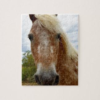 Puzzle Azucare el caballo del Appaloosa, _
