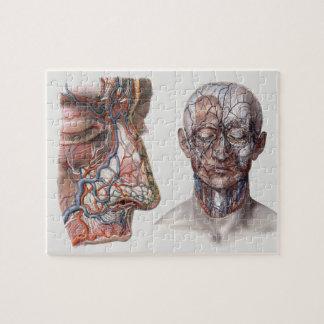 Puzzle Cabezas y caras humanas de la anatomía de la