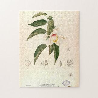"""Puzzle """"Campylosiphon del hibisco"""", C. 1880"""
