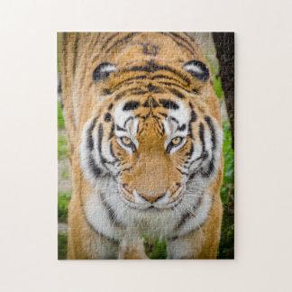 Puzzle Cara del tigre