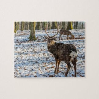 Puzzle Ciervo común en la nieve