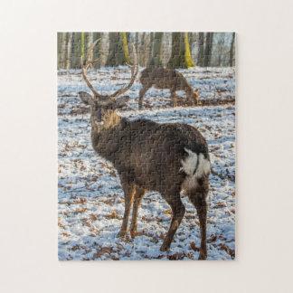 Puzzle Ciervo común en nieve