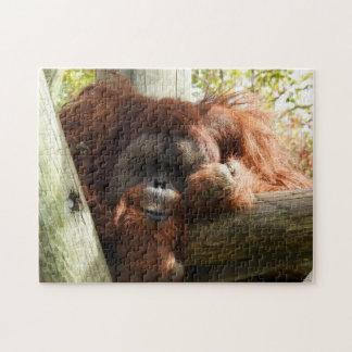 Puzzle Colección animal - orangután rojo