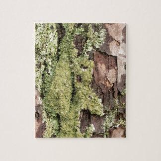 Puzzle Corteza de árbol de pino de la costa este mojada