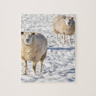 Puzzle Dos ovejas que se colocan en nieve durante