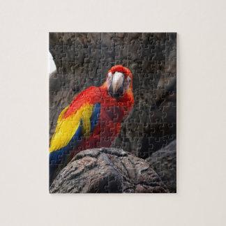 Puzzle El Ara del mascota de Papużka del pájaro del loro