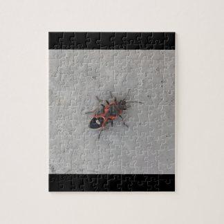 Puzzle Escarabajo de la anciano de caja