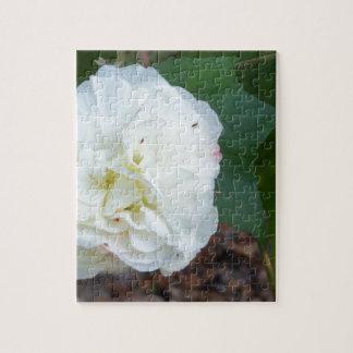 Puzzle flor blanca de los mutabilis del hibisco