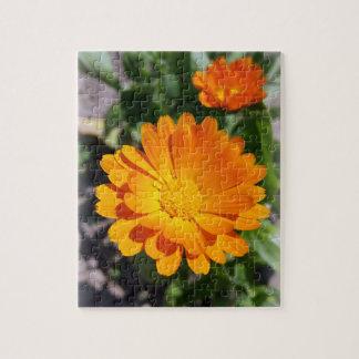 Puzzle flor de la maravilla