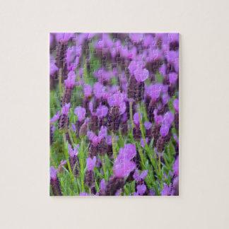 Puzzle Flor española púrpura de la lavanda