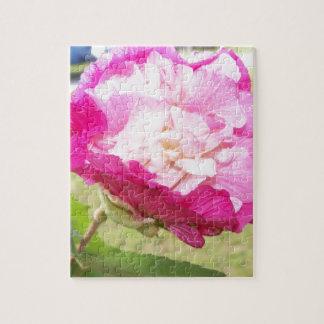 Puzzle floración cambiable del rosa y blanca del hibisco