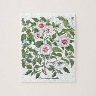 Puzzle Flores del hibisco del vintage de Basilius Besler