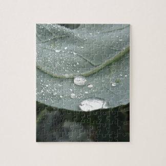 Puzzle Gotas de agua en las hojas de la coliflor