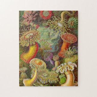 Puzzle Ilustracion del vintage de las anémonas de mar