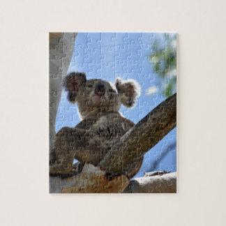 PUZZLE KOALA EN EL ÁRBOL QUEENSLAND RURAL AUSTRALIA