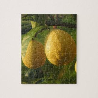 Puzzle Limones amarillos que crecen en el árbol en la