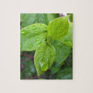Puzzle Lluvia sobre las hojas