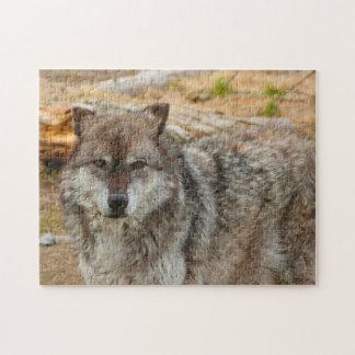 Puzzle Lobos de Yellowstone.