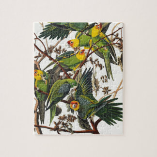 Puzzle Loro de Carolina - John James Audubon (1827-1838)
