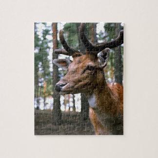 Puzzle Los ciervos de Brown acercan a árboles