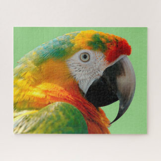 Puzzle Macaw