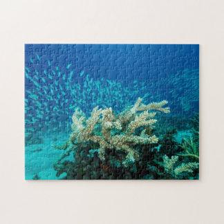 Puzzle Mar de coral tropical de la gran barrera de coral