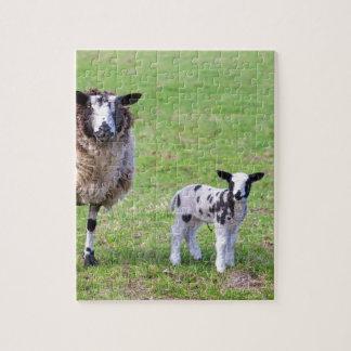 Puzzle Mime a las ovejas con dos corderos recién nacidos