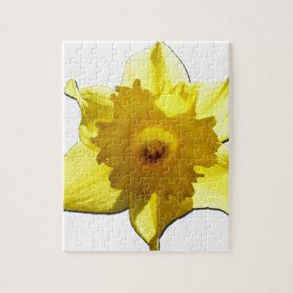 Puzzle Narciso 1,0 de la trompeta amarilla