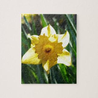 Puzzle Narciso amarillo 03.0.g