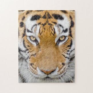 Puzzle Ojos del tigre