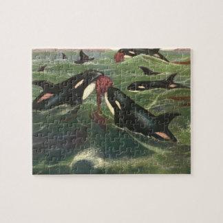 Puzzle Orcas o orcas, mamíferos marinos del vintage