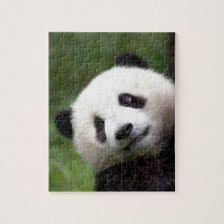 Puzzle Oso Cub de panda