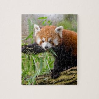 Puzzle Panda roja que come la hoja verde
