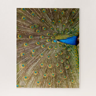 Puzzle Pavo real