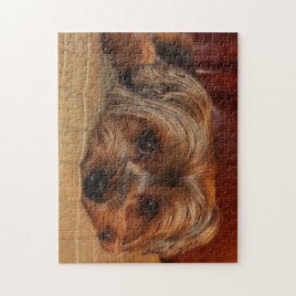 Puzzle Perro lindo del terrier de Yorkshire, yorkie