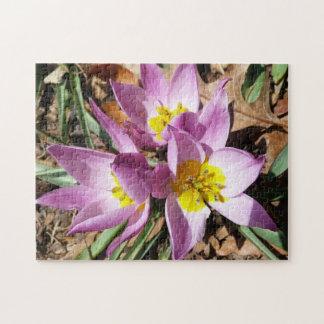Puzzle Primavera temprana de las azafranes rosadas floral