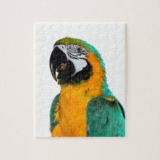 Puzzle retrato colorido del pájaro del loro del macaw del