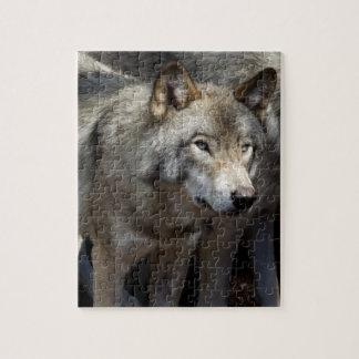 Puzzle Situación del lobo gris