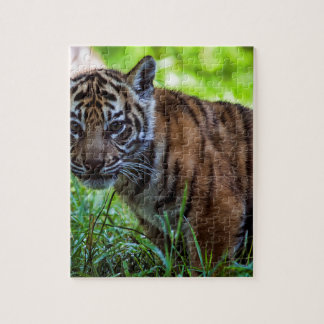 Puzzle Tigre Cub de Sumatran de los alquileres