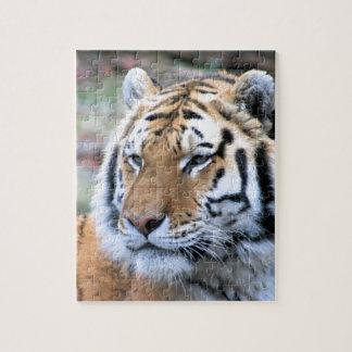 Puzzle Tigre de Bengala real estoico de los alquileres