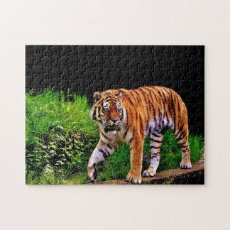Puzzle Tigre magnífico