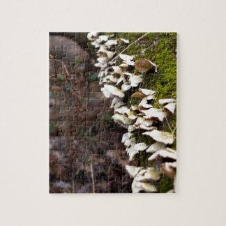 Puzzle tree_moss_winter mushroom_downed