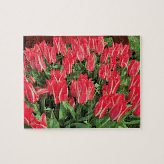 Puzzle Tulipanes de Pinocchio