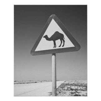 Qatar, Al Zubarah. Muestra-Camino de la travesía d Impresiones