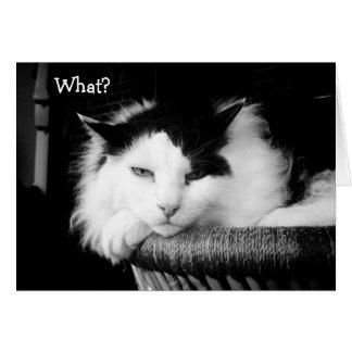 ¿Qué? Feliz cumpleaños: Tarjeta con el gato